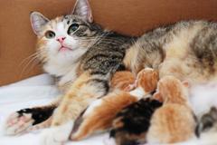Cat feeding little kittens Kuvituskuvat