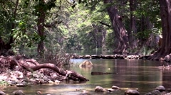 Calm lake or stream with large trees and shade Stock Footage