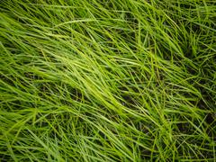 Authentic green grass background Stock Photos