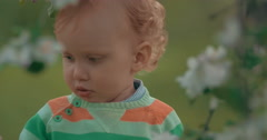 Little child in the park with bloomy trees Stock Footage