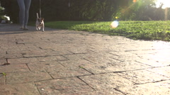 Young girl in Park with a very cute puppy Jack Russell Terrier walks on a leash Stock Footage