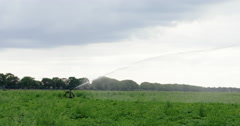 Sprinkling a field with a sprinkler - stock footage