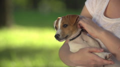 Young girl in Park with a very cute puppy Jack Russell Terrier holding, close up Stock Footage