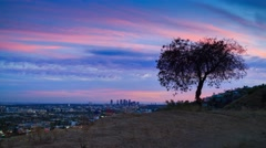 Lone tree silhouette Los Angeles cityscape sunset view from Hollywood Hills. 4K. Arkistovideo
