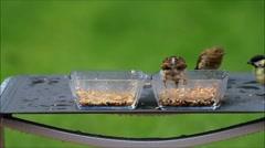 Feeding birds in the garden, glass bowl, green background Stock Footage