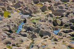 Wet sea stone, close-up - stock photo