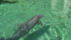 Dolphin close up swims and look on camera in sea pure water Stock Footage