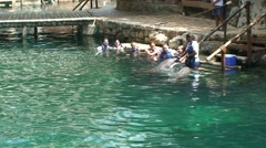 People interact and communicate with dolphins in water - stock footage
