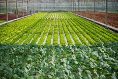 Commercial greenhouse interior Stock Photos