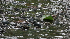 Shallow stream around leaf Stock Footage