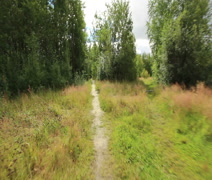 The path in the woods - stock footage