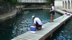 Trainer communicates with dolphins in water - stock footage