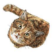 Little cat - stock illustration