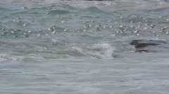 Gulls swimming in the ocean Stock Footage