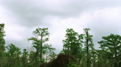 Bayou swamps, New Orleans, LA, driving past tree tops, van dolly - stock footage