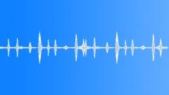 Goldfinch 1 Sound Effect