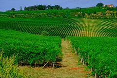 Tuscany  Wine Farm House - stock photo