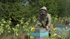 Stock Video Footage of the beekeeper takes out a framework