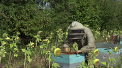 the beekeeper takes out a framework - stock footage