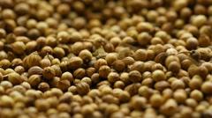 Coriander seeds. Stock Footage