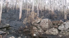 Burned forest after a huge fire in the north of Portugal - stock footage