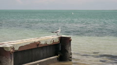 seagull standing on dock - stock footage