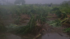 Banana trees destroyed by typhoon 1 pan slow motion- Stock Footage