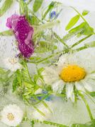 abstraction of wildflowers - stock photo