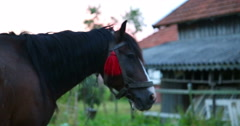 The horse is looking forward. Close-up. Stock Footage