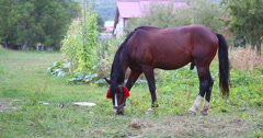A horse eating grass. Stock Footage