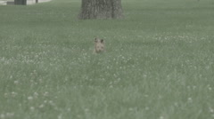 Little Puppy Running in Grass Stock Footage