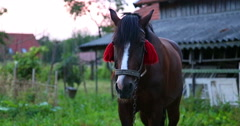 The horse is standing. Close-up. Stock Footage