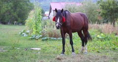 The horse is standing. Stock Footage