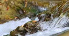 Sheshory waterfalls, Ukraine. Water flowing over rocks. Close-up. Stock Footage