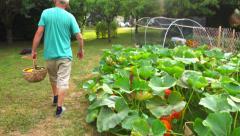 Vegetable garden 8 - Man holds basket of vegetables freshly harvested Stock Footage