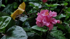Flowering single frame filming Stock Footage