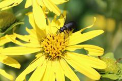Yellow Pollinator Stock Photos