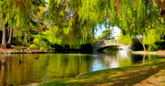 4K Pond with Ducks and Arch Rock Bridge with Willow Trees, Beacon Hill Park Stock Footage