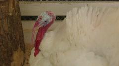 Turkey at the farm Arkistovideo