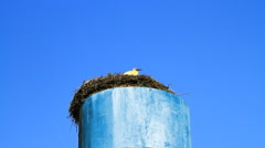 Stork sitting in nest. Stock Footage