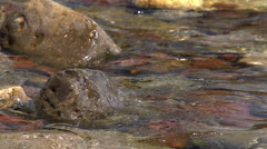 The stones washed by water. Slow Motion  Stock Footage