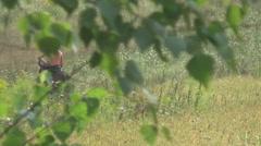 meadow, girl on horseback - stock footage