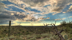 Cactus Sunset 2 Stock Footage