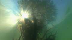 The view from underwater  on the reflection of tree branches and sunlight. Stock Footage