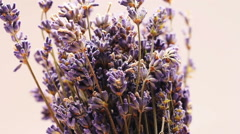 Lavender flowers isolated on white, rotating Stock Footage