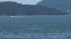 Orca, Killer Whale, Black Fish, Whale, Spyhop Stock Footage