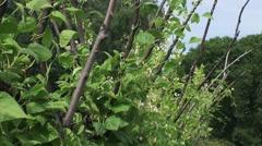 Beanstalks blooming in vegetable garden Stock Footage