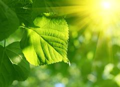 closeup of green leaf and sun beams - stock photo