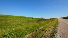 Kansas Flint Hills cows 1 Stock Footage