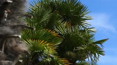 Palm Trees - 08 - Sunny and Windy Day - stock footage